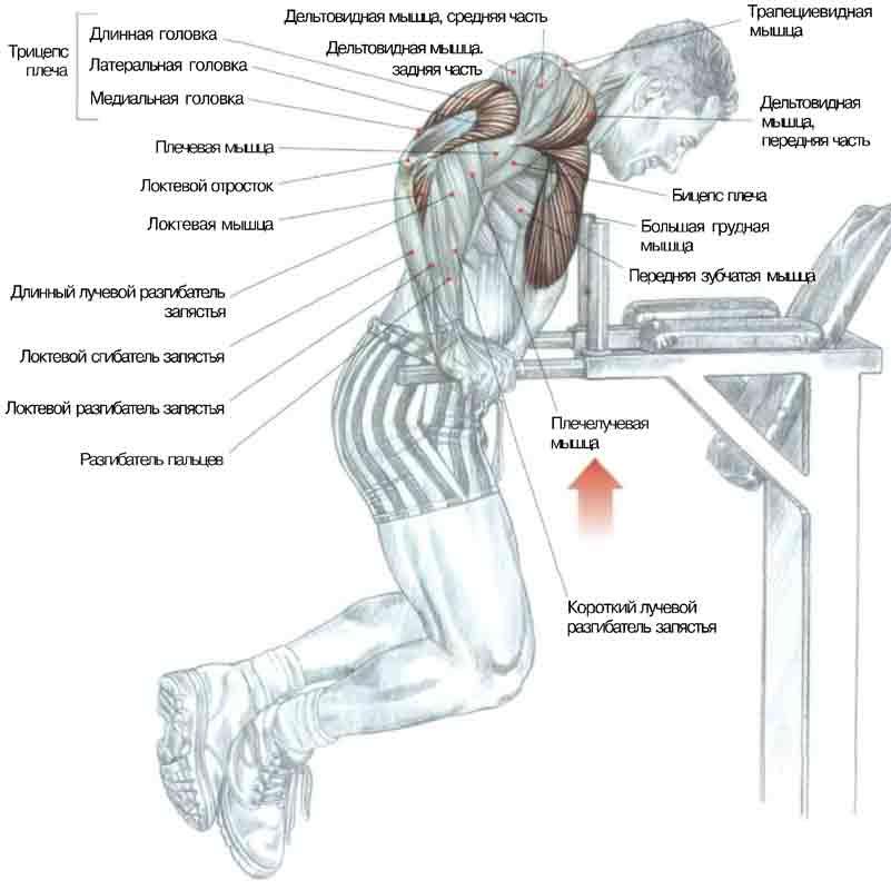 Как накачать мышцы на брусьях