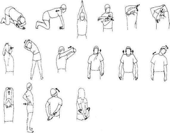 Подвижность грудного отдела позвоночника