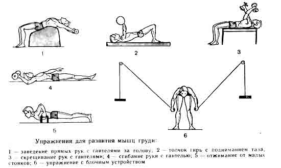 Упражнения для накачивания